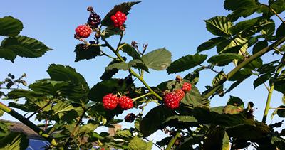 oogsten_in_de_tuin2 - kopie