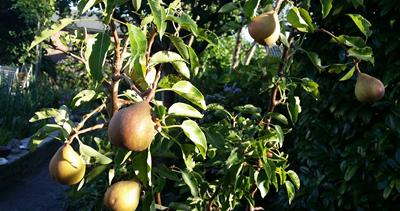 oogsten_in_de_tuin3 - kopie