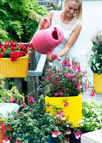 fuchsia_balkon_plant_van_het_jaar4